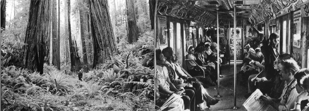 trees_train